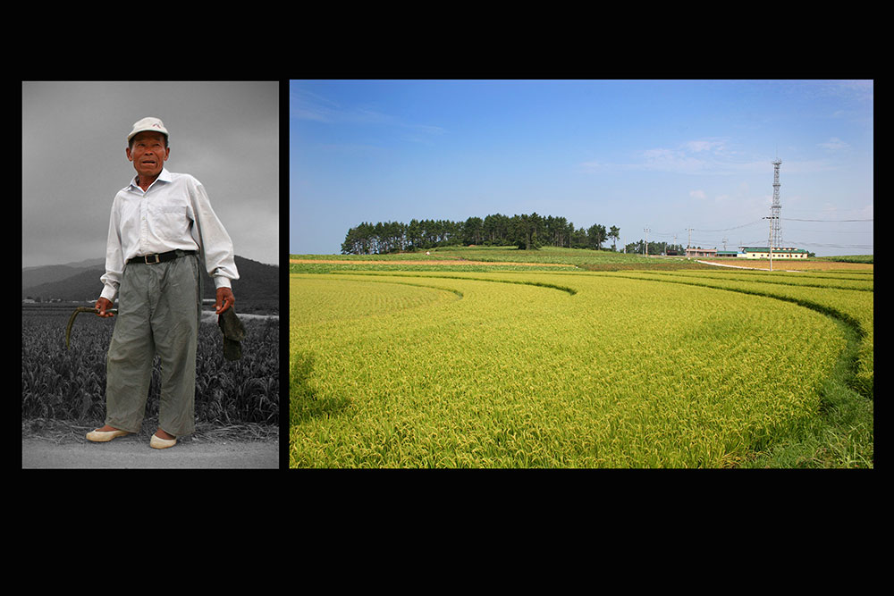 korea rice farmer